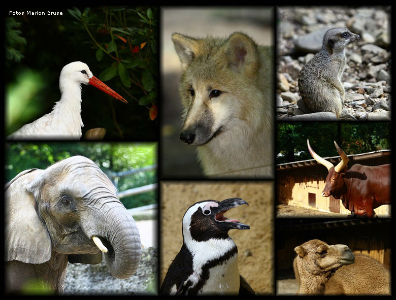 Tiere im zoo wuppertal collage fotos und collage marion bruse