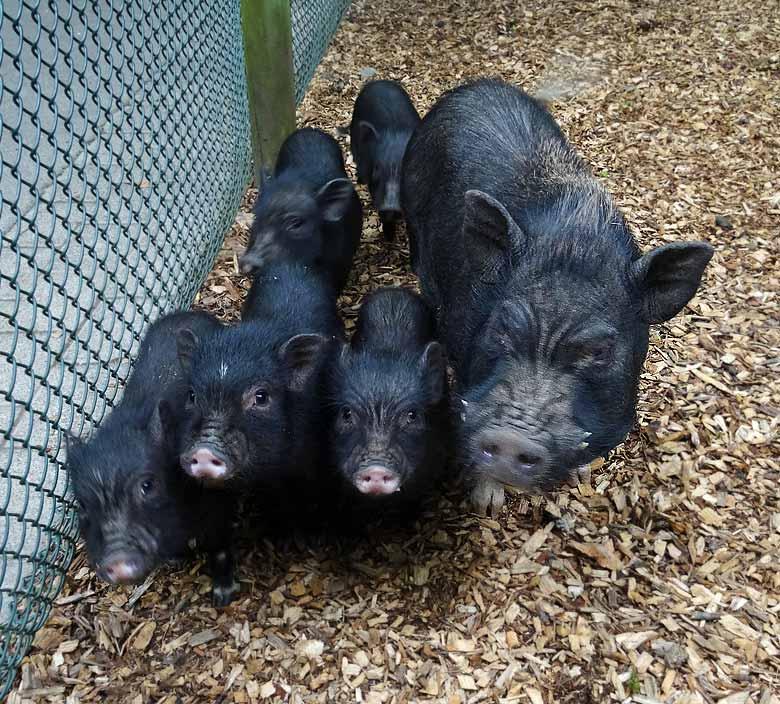 www.zoo-wuppertal.net - Tiernachrichten Juni 2016 aus dem ...