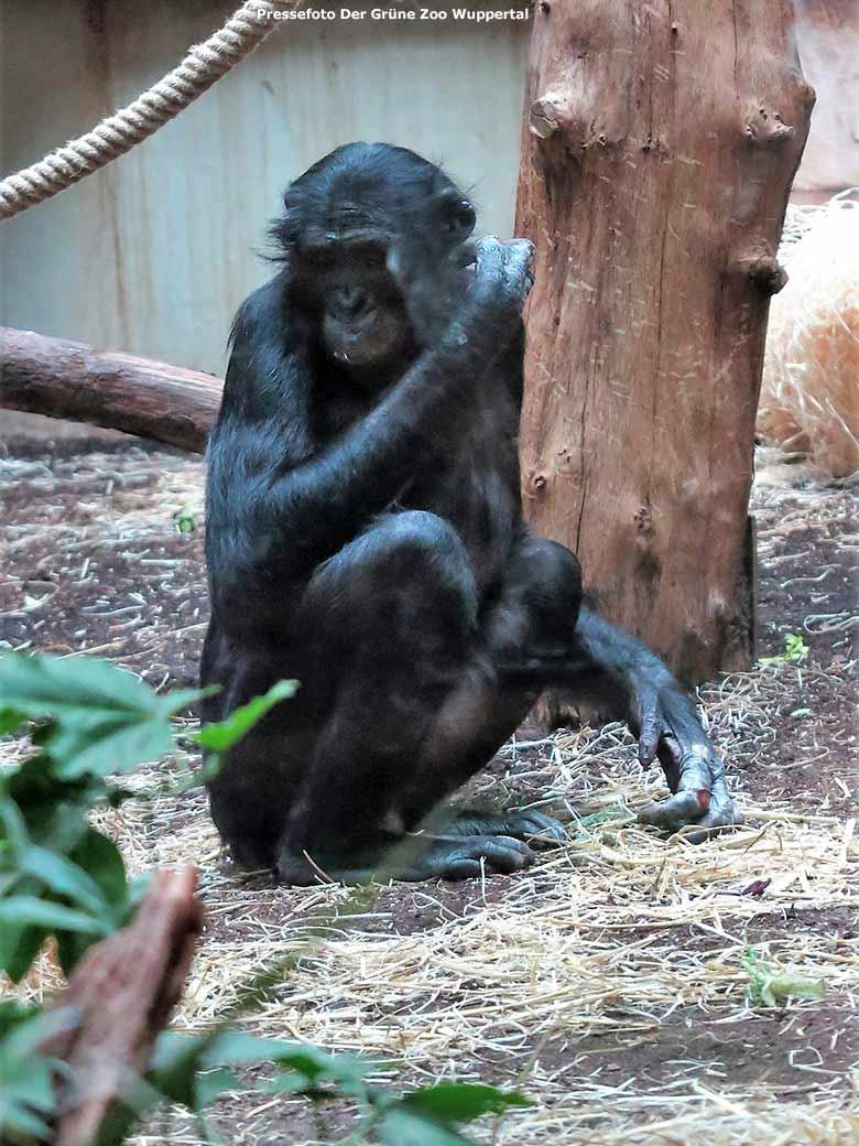 Zoo Wuppertal Bili