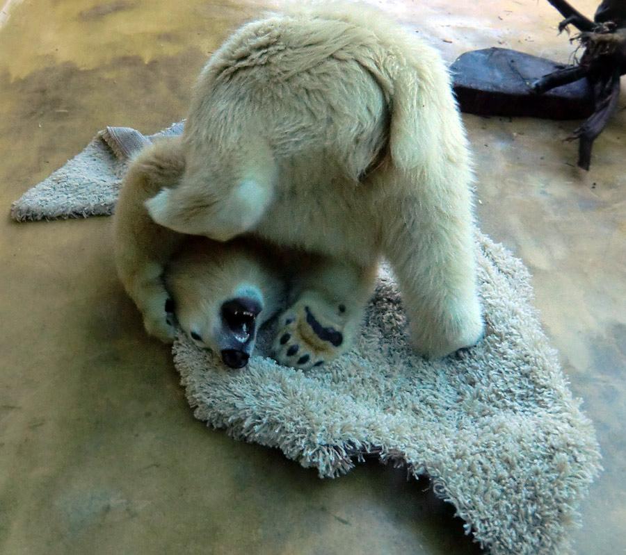 wwwzoowuppertalnet  Teppich für Eisbärjungtier Anori