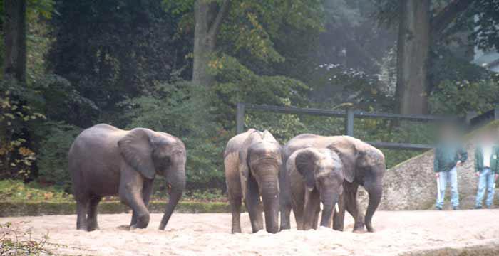 Elefanten beim sandbaden im wuppertaler zoo im oktober 2002
