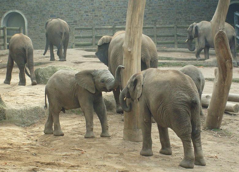 Elefanten im zoologischen garten wuppertal im oktober 2009