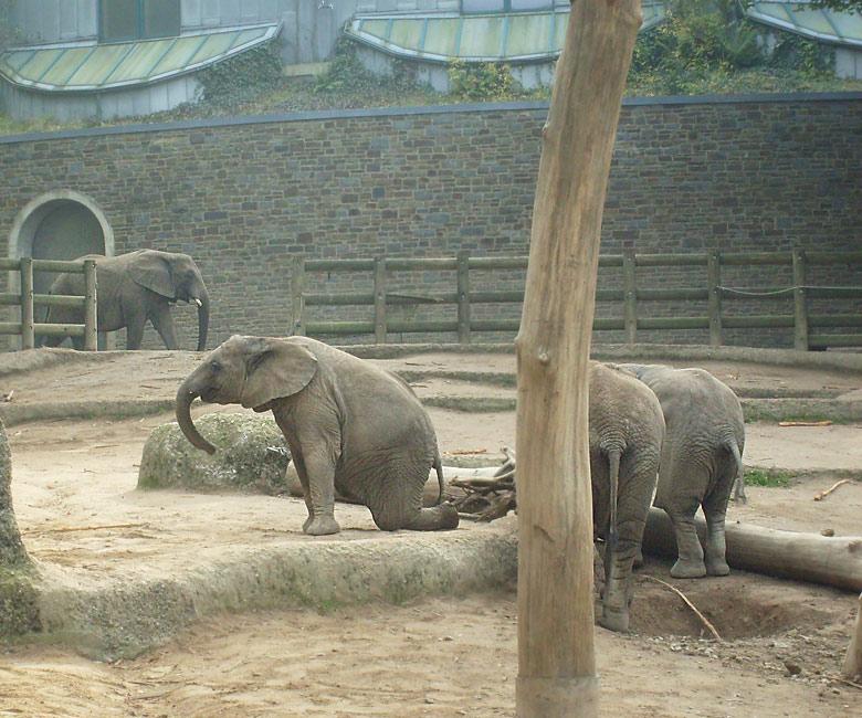 Bei den afrikanischen elefanten im zoo wuppertal im oktober 2009