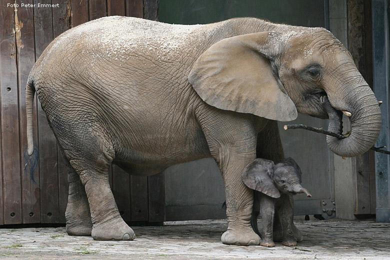 ein afrikanischer elefanten mit jungtier in der d mmerung. Black Bedroom Furniture Sets. Home Design Ideas